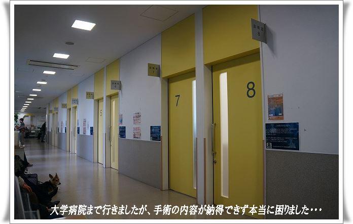 困った病院