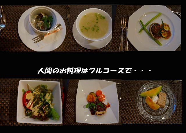 人間の料理