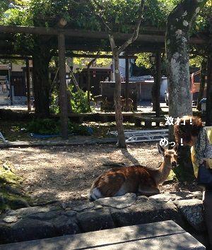 鹿とあんこ。さん