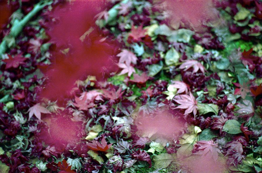 紅葉の季節に