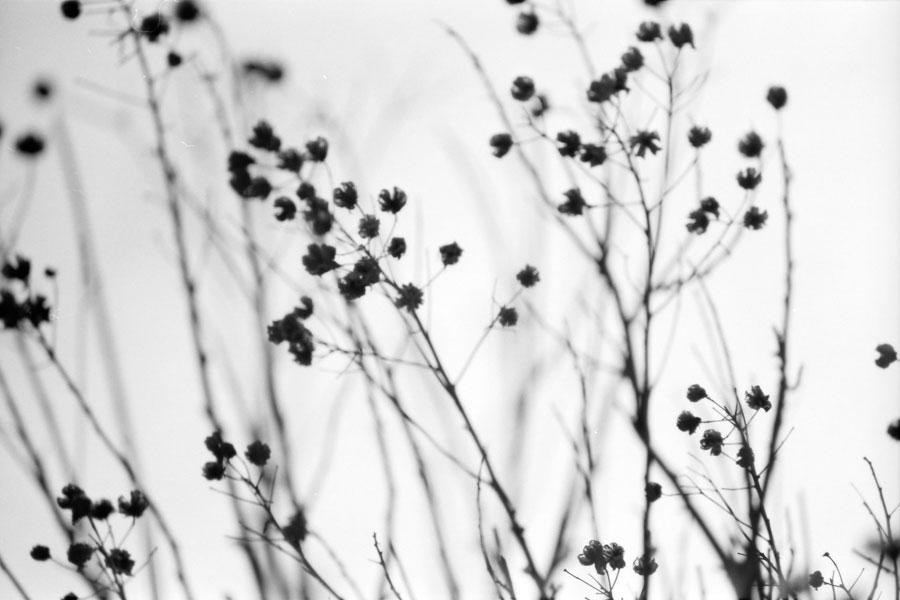 疎水の木々