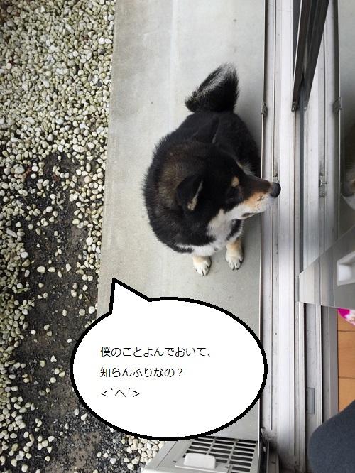 まるちゃん2015032304
