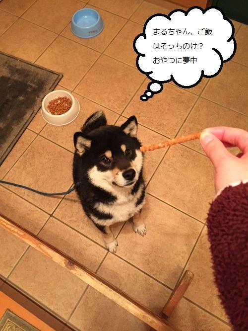 まるちゃん2015032402