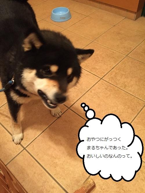 まるちゃん2015032403