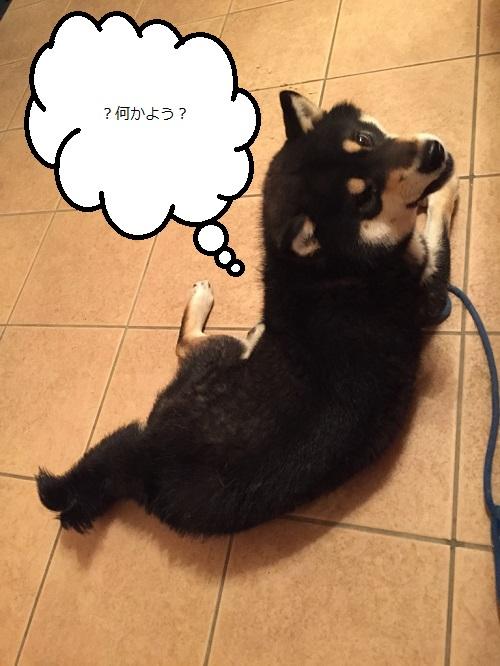 まるちゃん2015032602