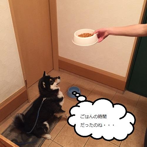 まるちゃん2015032603