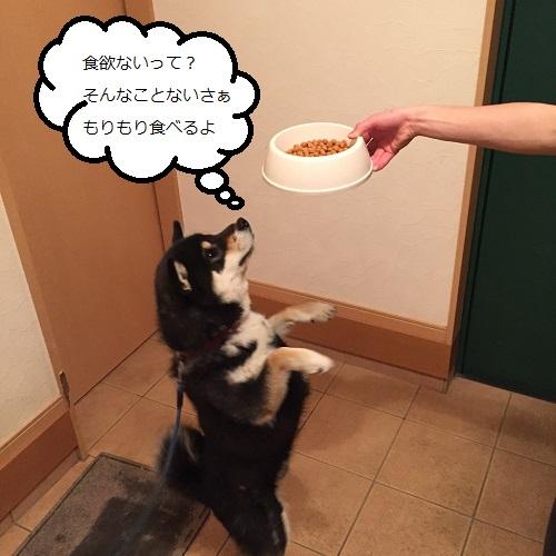 まるちゃん2015032604