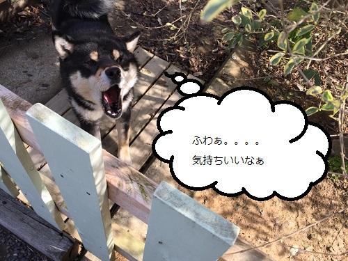 まるちゃん2015032702