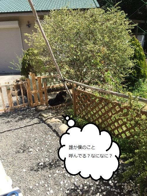 まるちゃん2015033002