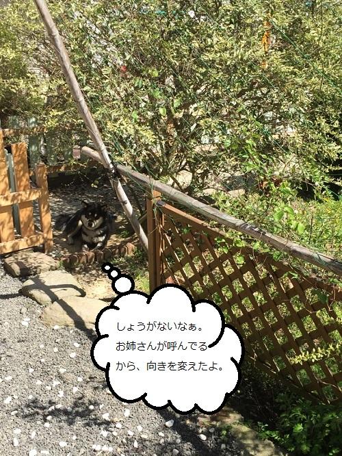 まるちゃん2015033003
