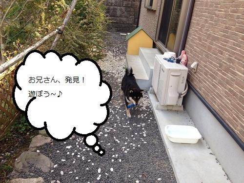まるちゃん2015033101
