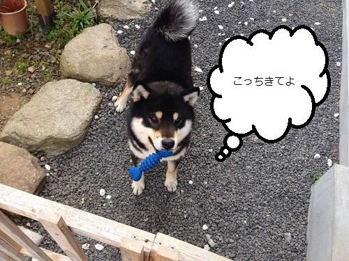 まるちゃん2015033102