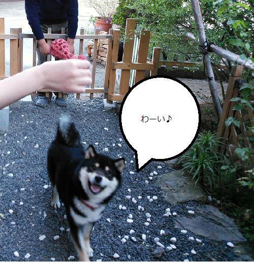 まるちゃん2015052401