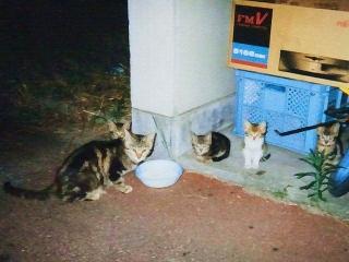 130721_1300昔世話してたネコ一家(1998_06_16)