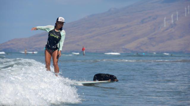 cove-surf - 1 (10)
