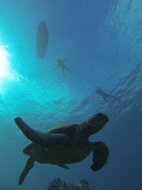 snorkel-8-18 - 1 (2)