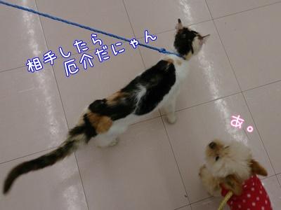 3_201504051055014fa.jpg