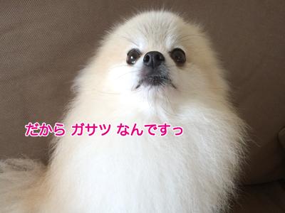 IMG_2364.jpg