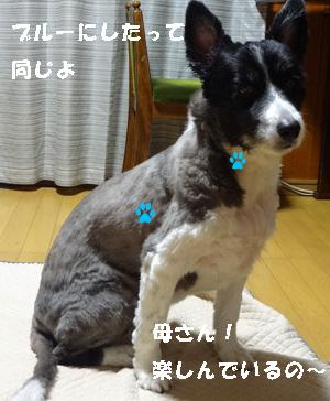 いぼ2 (1)