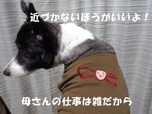 いぼ4 (1)