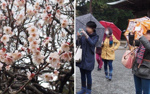 開運みちびかれツアー in 鎌倉恵方参り