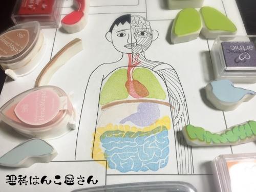 人体マップ