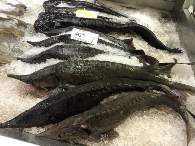 露_スーパーマーケットの魚