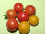トマト150827