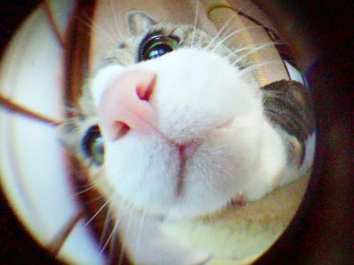 みく魚眼02