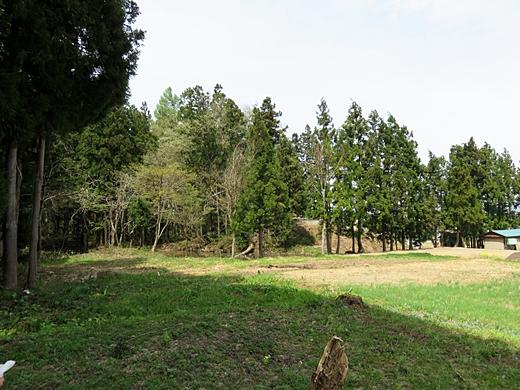 20150429-52.jpg