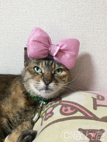 2015猫の日_5