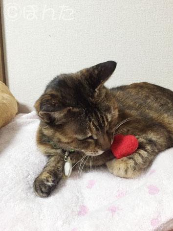 2015猫の日_8