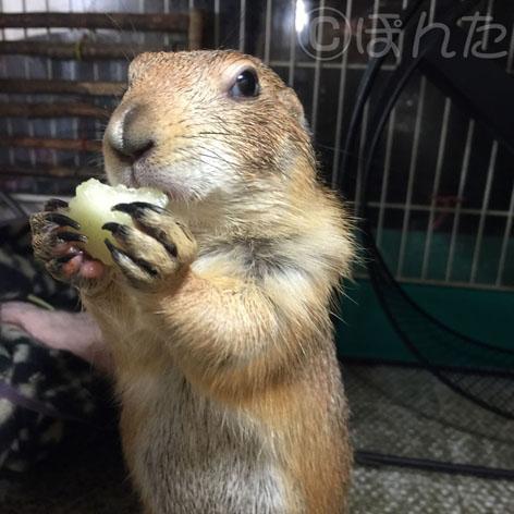 れんげ_食う2