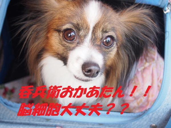 P5132535_convert_20150523061521.jpg