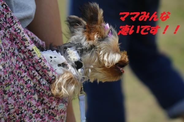 _MG_7060_convert_20150529050211.jpg