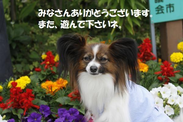 _MG_7170_convert_20150602104627.jpg