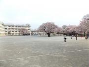 20150401三鷹第二小学校桜1