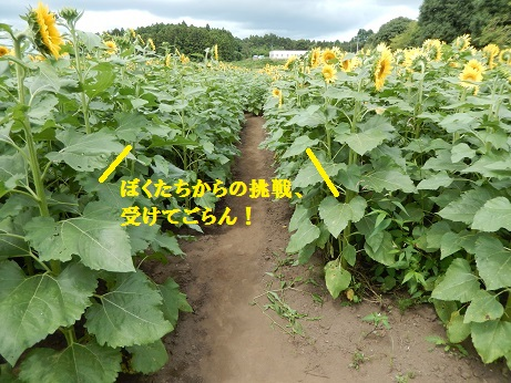 DSCN9680.jpg