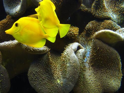 150516-055サンゴ礁の魚(S)