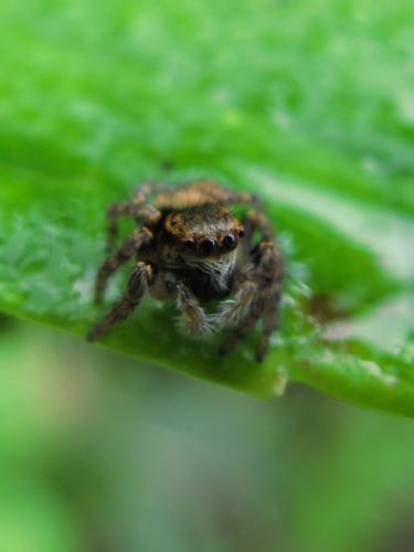 101012蜘蛛1
