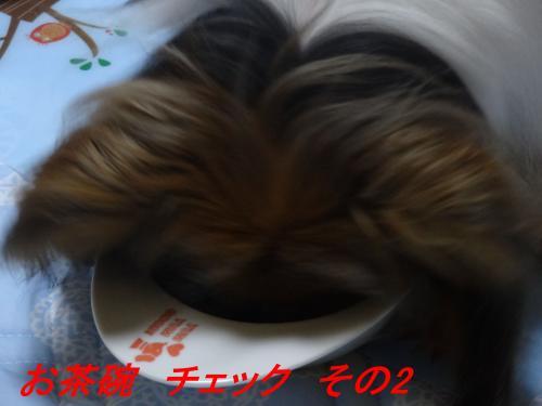 DSC01528_convert_20150612202748.jpg