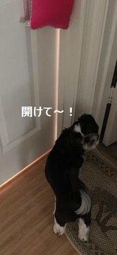 IMG_3980moji.jpg