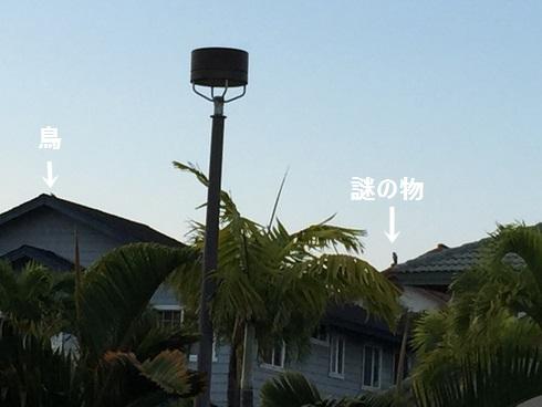 IMG_4326moji.jpg