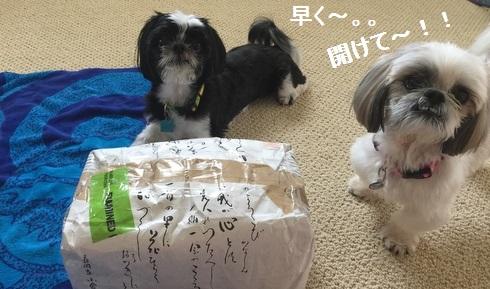 IMG_4441moji.jpg