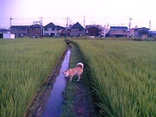 水田Ⅱ07-08-01
