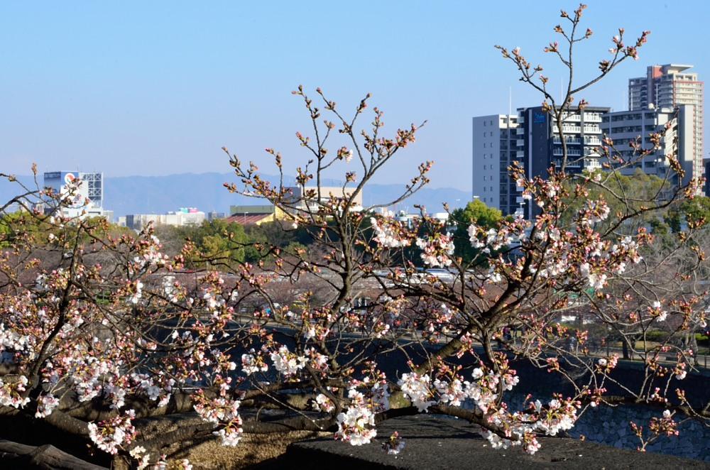 _お堀と桜DSC_2195