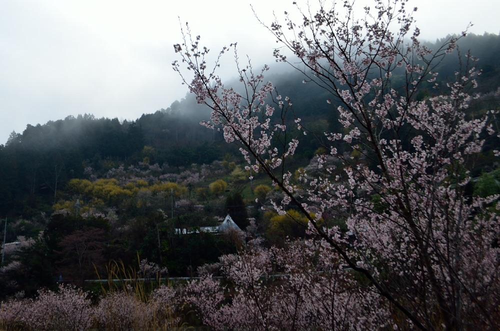 _川岸アップ対岸DSC_2421