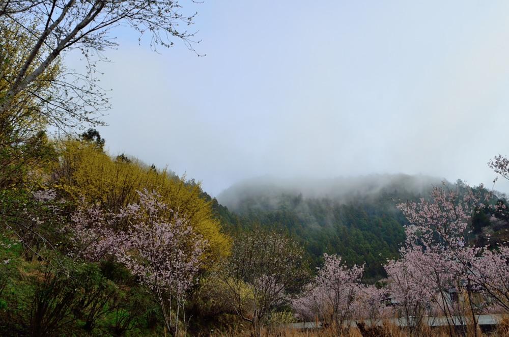 _川岸アップ対岸靄DSC_2440