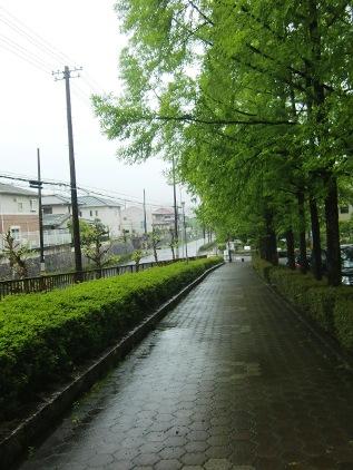 sakaame2.jpg