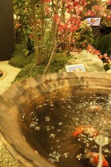 気まぐれつれづれにっき-金魚